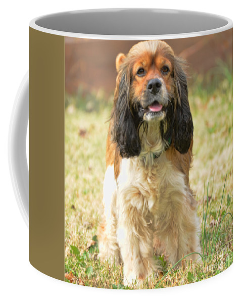 Nature Coffee Mug featuring the photograph My Little Bear by Debbie Portwood