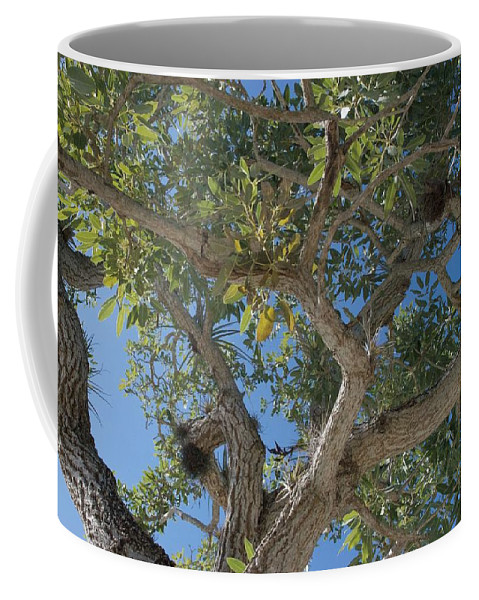 Air Plants Coffee Mug featuring the photograph Naples Tree by Joseph Yarbrough