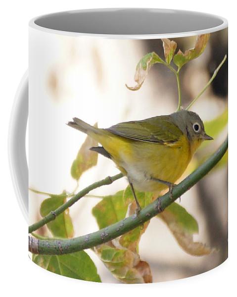 Birds Coffee Mug featuring the photograph Nashville Warbler by Lori Tordsen