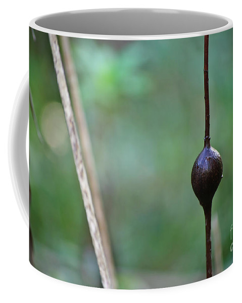 Nature Coffee Mug featuring the photograph Nature's Protuberance by Diego Re