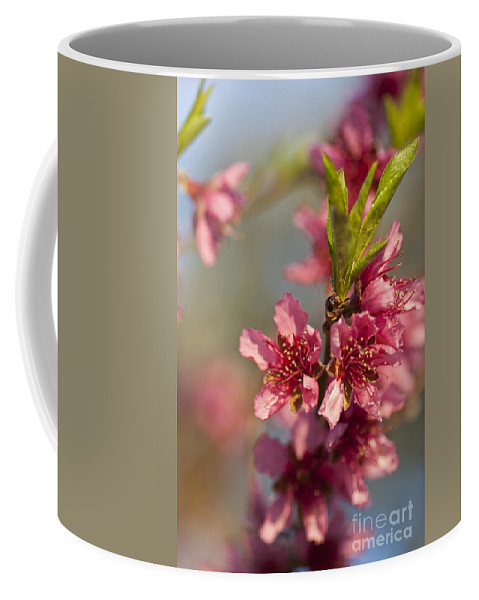 Nectarine Coffee Mug featuring the photograph Nectarine Blossoms by Jim And Emily Bush