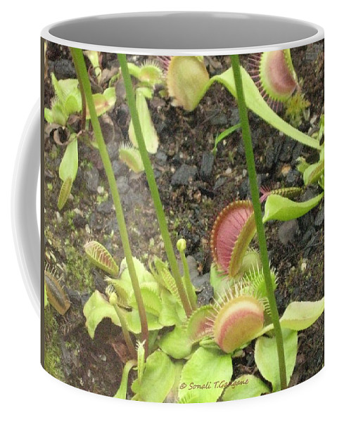 Pitcher Plant Coffee Mug featuring the photograph Nepenthes by Sonali Gangane