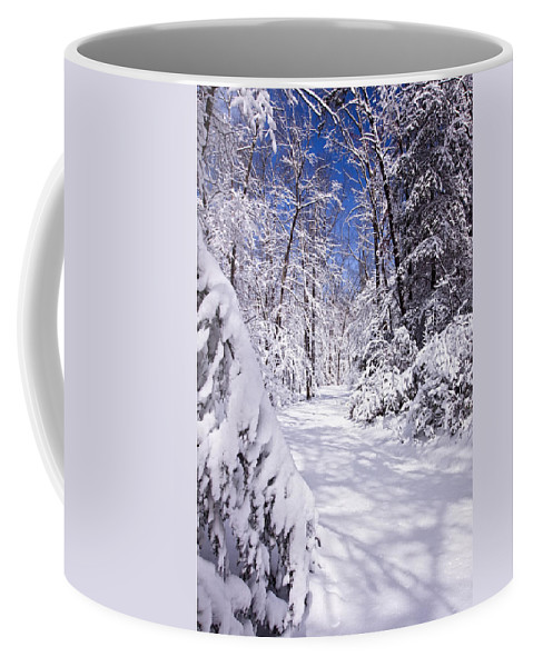 Forest Paths Coffee Mug featuring the photograph No Footprints by Rob Travis
