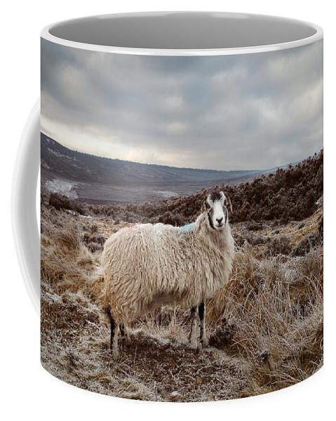 Sheep Coffee Mug featuring the photograph North York Moors Sheep by Martin Williams