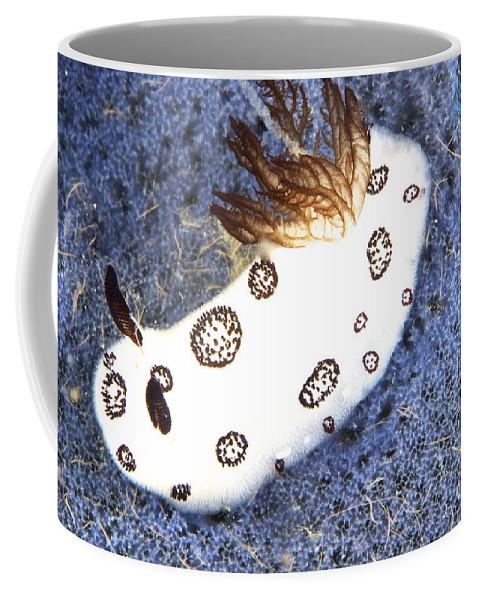 Jorunna Funebris Coffee Mug featuring the photograph Nudibranch Feeding On A Sponge, Papua by Terry Moore