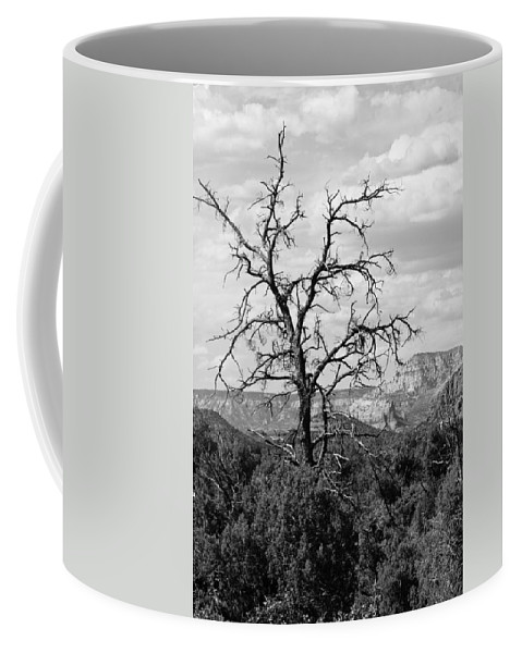 Arizona Coffee Mug featuring the photograph Oak Creek Tree by Lauri Novak