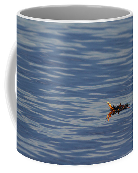 Water Coffee Mug featuring the photograph Oak Leaf Floating by Daniel Reed