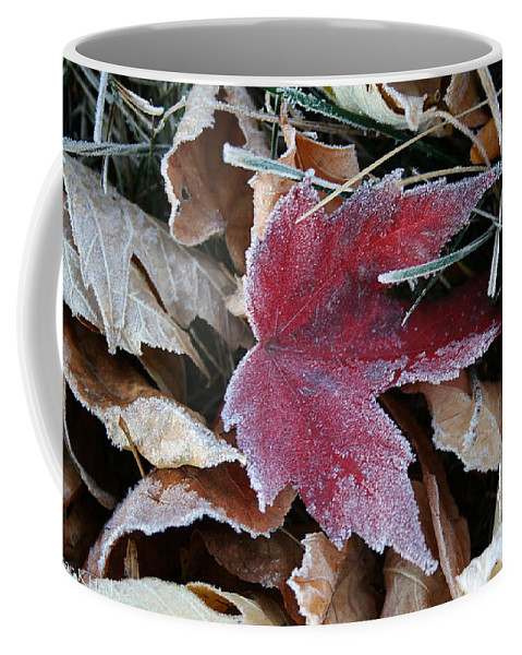 Outdoors Coffee Mug featuring the photograph October Frost by Susan Herber