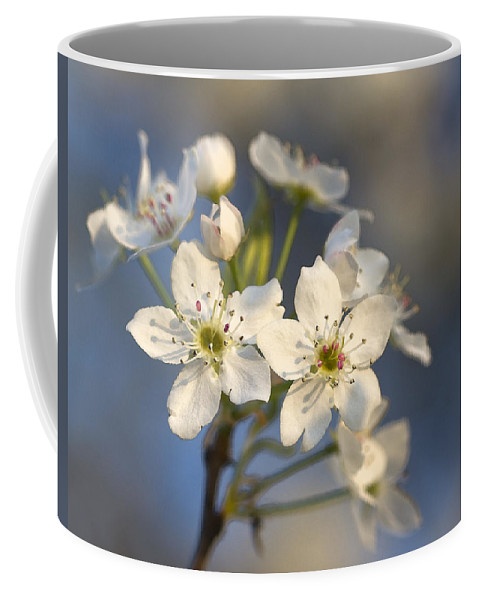 Bradford Pears Coffee Mug featuring the photograph One Fine Morning In Bradford Pear Blossoms by Kathy Clark