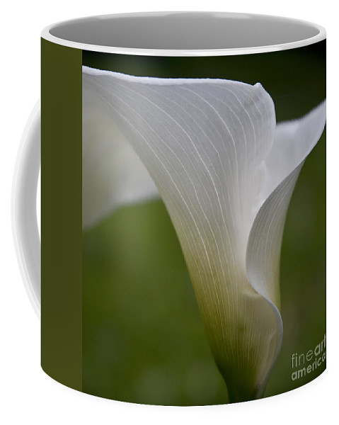 White Calla Coffee Mug featuring the photograph Open White Calla Lily II by Heiko Koehrer-Wagner
