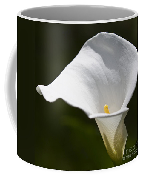 Nature Coffee Mug featuring the photograph Open White Calla Lily V by Heiko Koehrer-Wagner