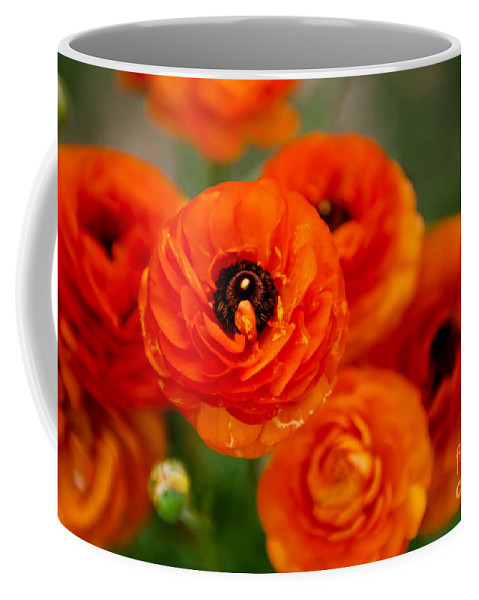Flower Coffee Mug featuring the photograph Orange Bulbs by Syed Aqueel