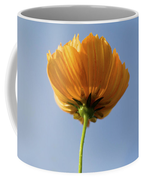 Cosmos Coffee Mug featuring the photograph Orange Cosmos Too by Rich Franco
