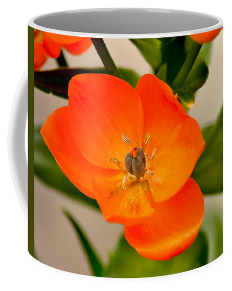 Orange Star Coffee Mug featuring the photograph Orange Star  by William Jobes