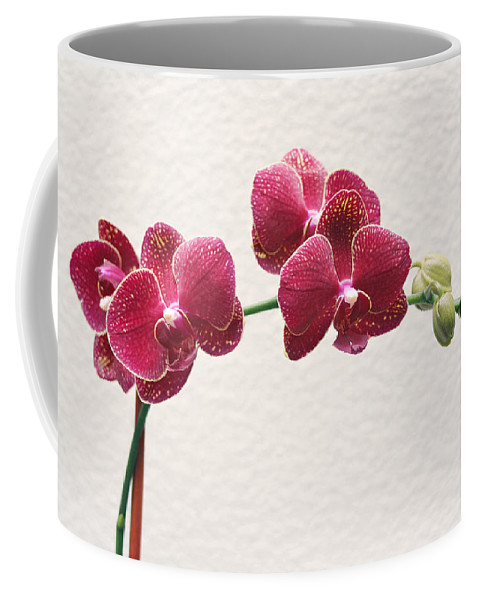 Flower Coffee Mug featuring the photograph Orchid by Masha Batkova