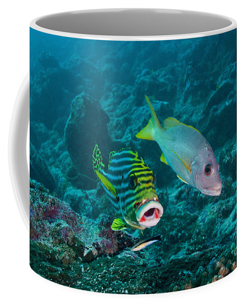 Snapper Coffee Mug featuring the photograph Oriental Sweetlip And Yellow Snapper by Mathieu Meur