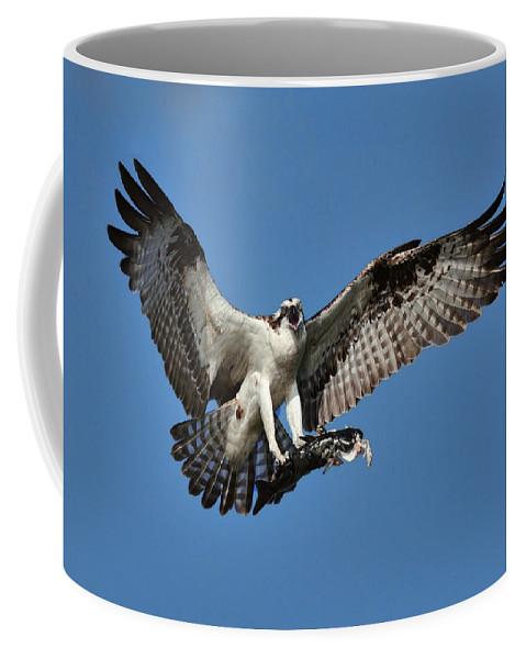 Osprey Coffee Mug featuring the photograph Osprey Breakfast by Bill Dodsworth