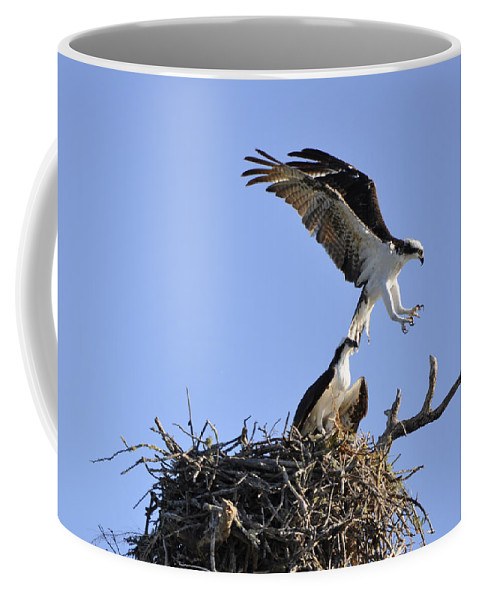 Osprey Coffee Mug featuring the photograph Osprey Coming In For A Landing by Christine Stonebridge
