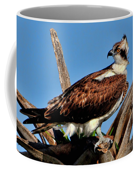 Osprey Coffee Mug featuring the photograph Osprey On A Windy Morning by Bill Dodsworth