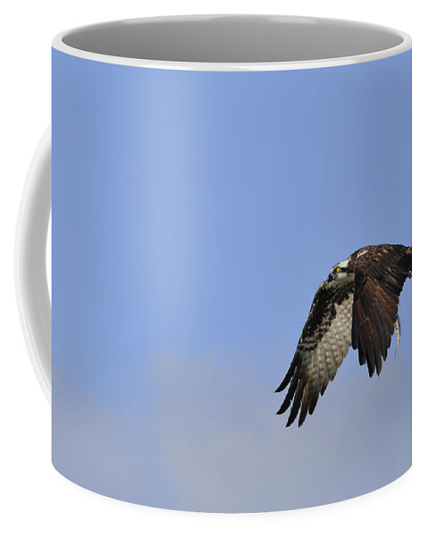 Osprey Coffee Mug featuring the photograph Osprey On The Move by Christine Stonebridge