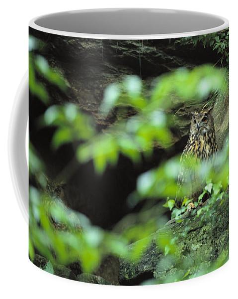 Europe Coffee Mug featuring the photograph Owl In Woodland, Sachsische Schweiz by Norbert Rosing