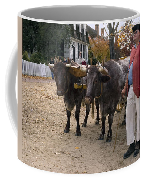 2 Oxen Walking Duke Of Glouster Street Coffee Mug featuring the photograph Oxen And Handler by Sally Weigand