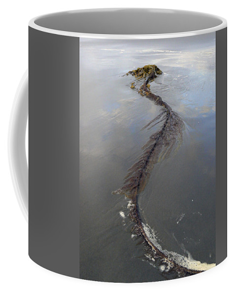 Seaweed Coffee Mug featuring the photograph Pacific Giant by Pamela Patch