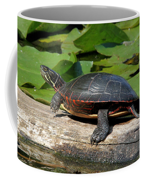 Painted Turtle Coffee Mug featuring the photograph Painted Turtle On Log by Doris Potter