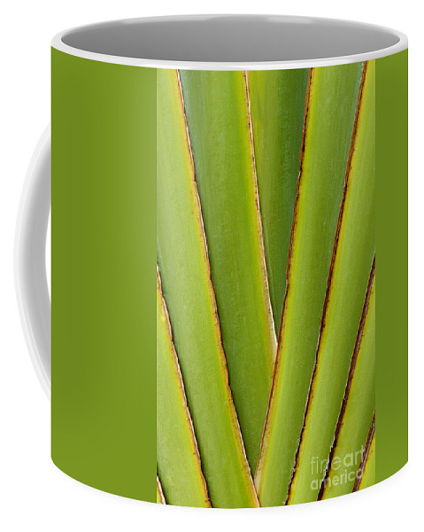 Bronstein Coffee Mug featuring the photograph Palm Frond Detail by Sandra Bronstein