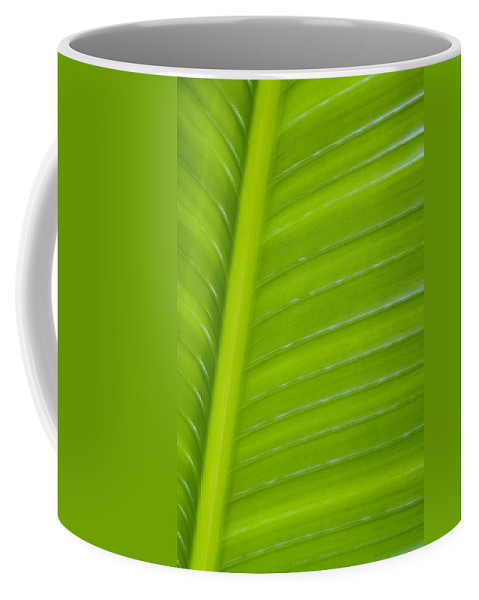 Abstract Coffee Mug featuring the photograph Palm Pattern by Joe Carini - Printscapes