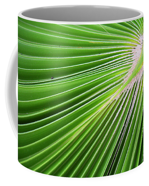 Roena King Coffee Mug featuring the photograph Palm Tree Frond by Roena King