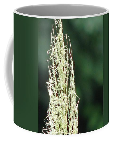 Sviatoslav Coffee Mug featuring the photograph Pampas Grass 02 by Sviatoslav Alexakhin