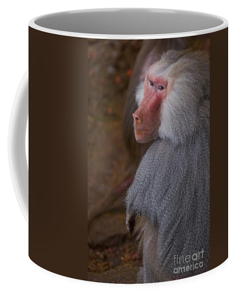 Africa Coffee Mug featuring the photograph Papio Hamadryas Baboon by Andrew Michael