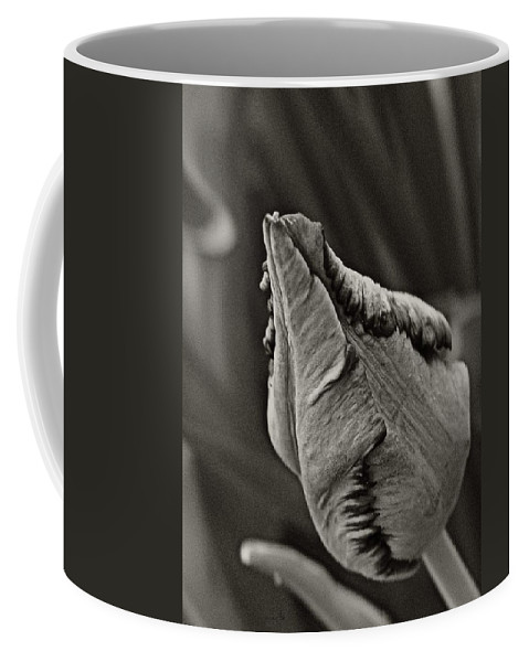 Coffee Mug featuring the photograph Parrot Tulip In Black And White by Chris Berry