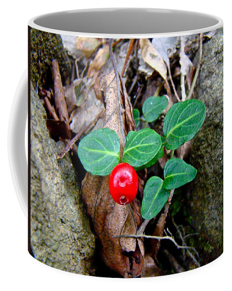 Partridge Berry Coffee Mug featuring the photograph Partridge Berry Berry - Mitchella Repens by Mother Nature