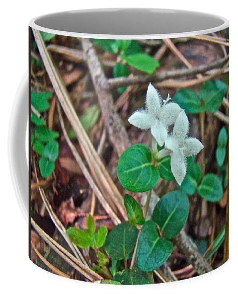 partridge Berry Coffee Mug featuring the photograph Partridge Berry Flower - Mitchella Repens by Mother Nature