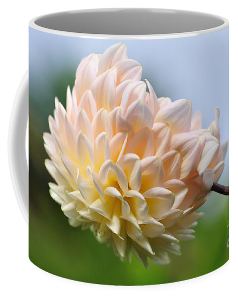 Photography Coffee Mug featuring the photograph Pastel Dahlia by Kaye Menner