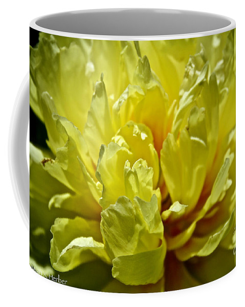 Flower Coffee Mug featuring the photograph Pastel Peony by Susan Herber