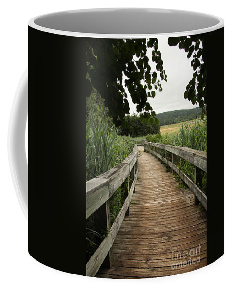 Pathway Coffee Mug featuring the photograph Paths by Diane Greco-Lesser