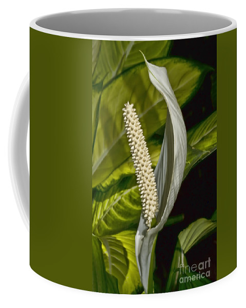 Lilly Coffee Mug featuring the photograph Peace Everyone by Deborah Benoit