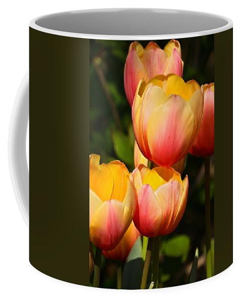 Tulip Array Coffee Mug featuring the photograph Peachy Tulips by Byron Varvarigos