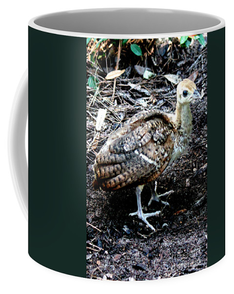 Peachick Coffee Mug featuring the photograph Peacock Baby by Kathy White