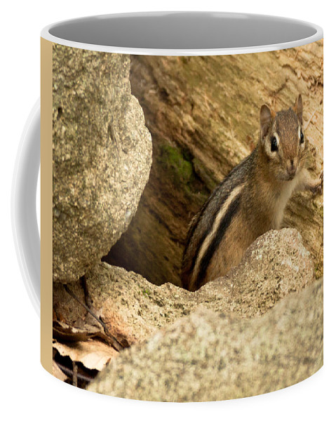 Nature Coffee Mug featuring the photograph Peek A Boo by Frank Pietlock