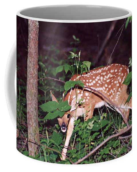 Fawn Coffee Mug featuring the photograph Peek A Boo I See You by Michael Peychich