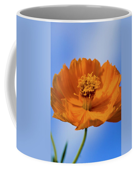 Cosmos Coffee Mug featuring the photograph Pefect In Orange by Rich Franco