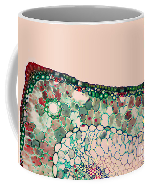 Science Coffee Mug featuring the photograph Pine Needle Light Micrograph by Gary DeLong and Photo Researchers