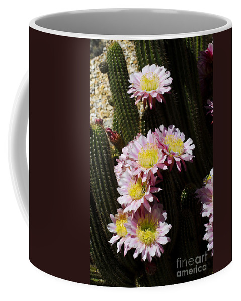 Pink Coffee Mug featuring the photograph Pink Cactus by Jim And Emily Bush