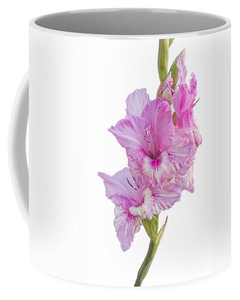 Gladiolus Coffee Mug featuring the photograph Pink Gladiolus by Ann Garrett