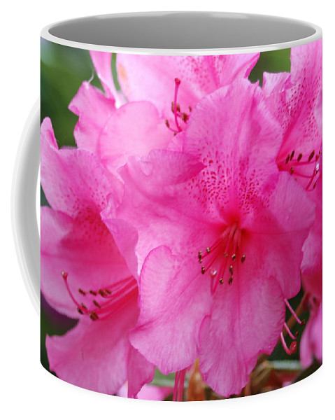 Pink Coffee Mug featuring the photograph Pink Rhody by Michael Merry