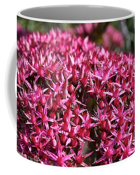 Outdoors Coffee Mug featuring the photograph Pink Starz by Susan Herber